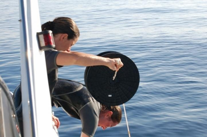 Volunteer-Work-Mauritius-Monitoring-Dolphins-2