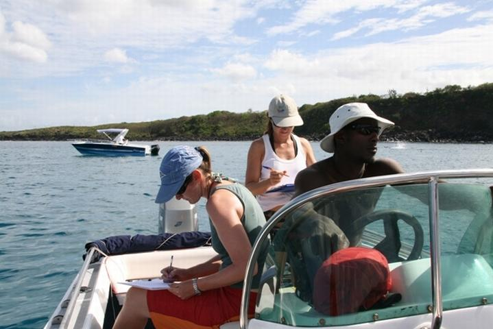 Volunteer-Work-Mauritius-Monitoring-Dolphins-4