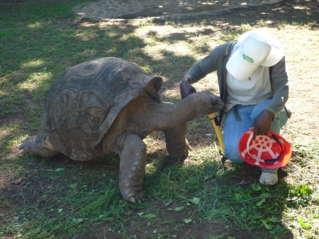 Volunteer-Work-Rodrigues-3b-Guide-Tortoise-Park