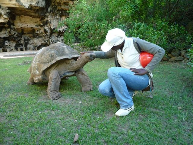 Volunteer-Work-Rodrigues-3c-Guide-Tortoise-Park