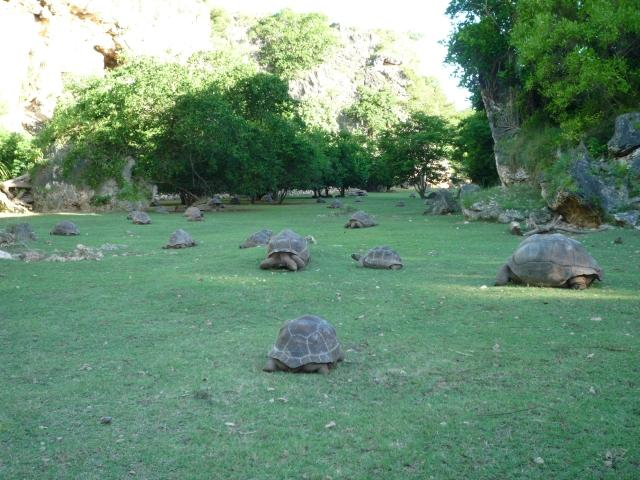 Volunteer-Work-Rodrigues-3e-Tortoise-Park